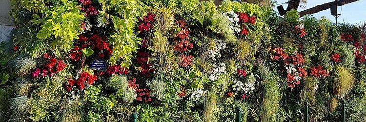 Nos Réalisations - Mur Végétal Occitanie