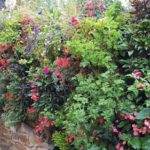 Mur Végétal Occitanie : des Créations Robustes